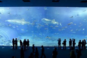 水族館デートに誘われた人が実際に水族館に行った時の風景。